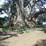 baobab plage
