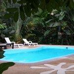 Den rena fina poolen ligger inbäddad i grönska!