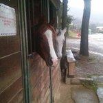 Cavalli all'esterno