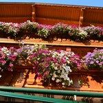 wunderschöne Balkonblumen