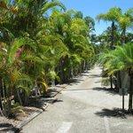 Hibiscus Drive