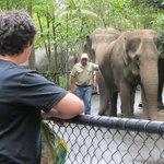 my Grandsons loving the elephants 2012