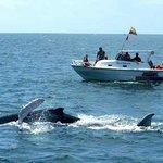 tur de ballenas jorobadas