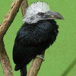 An interesting looking bird