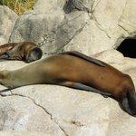 Baby seal and mum/dad
