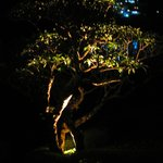 Night-time lighting of a tree in the garden