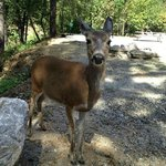 Our Deer Friend