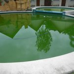 Green sludge in the pool
