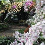 la maison des orchidées