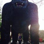 Wookey Holw giant Gorilla