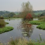 the pond we made