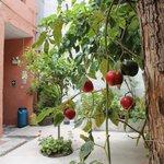 Wonderful things growing in the courtyard