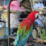 Parrot at the supermarket