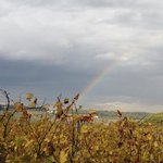 Rainbow over Fattoria Corzano e Paterno winery