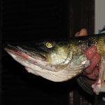 Frischer Fisch!!!
