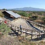 The Leakey Excavations