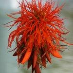 Blüte an einem Tropenbaum