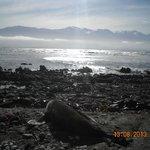 leone marino e splendido sfondo