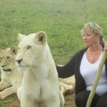 Walking with lions nov26 2013