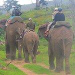 Riding elephants 26nov 2013