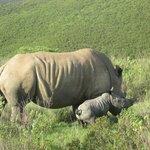4 day old rhino lovely Nov 25 2013
