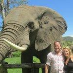 Elephant picnic Nov 26 2013
