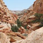 Cohab Canyon hike