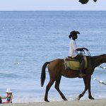 Lots of Opportunities for Horseback Riding on the Beach!