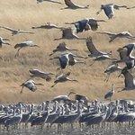 Muleshoe National Wildlife Refuge