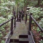 Rainforest Path (near the Spa)