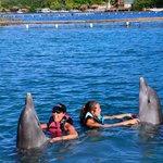 Dolphin Shake