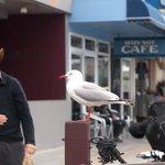 Oh those seagulls!