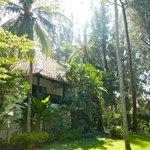 Coconut Rooms