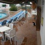 gato sarnoso en la piscina