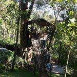 Tree house @ Resort