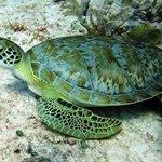 many many turtles