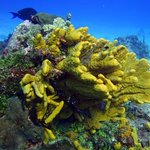 great coral formations and color