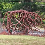 Tree roots or art?