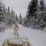 Dog sledding with Mahoosuc Guide Service