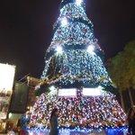 文学館前のクリスマスツリー