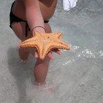 sea star!!
