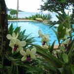 Орхидеи, Бассейн у пляжа