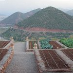 The Kasbah's Vegetable Garden