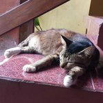 The non-skittish Kudos Guesthouse cat