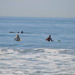 More surf lessons with dolphins