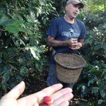 Victor explains coffee harvesting