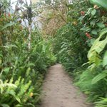 Caminos con exhuberante vegetación que constituyen uno de los paseos dentro del hotel