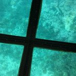 glass bottom boat view