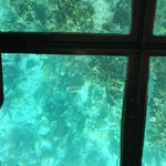 glass bottom boat view