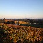 Autumn Vines at Trinity Vineyards
